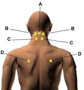 Vital Diaphragm Point D